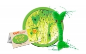 Nerve Cell (Neuron)